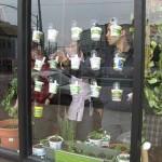 Window Growing Workshop