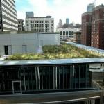 Established Plants on Green Roof