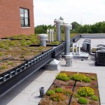 Green Roof Tray System